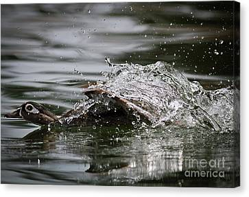 Canvas Print featuring the photograph The Escape by Douglas Stucky