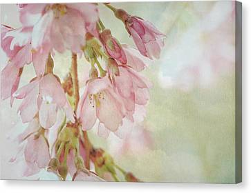 Canvas Print featuring the photograph The Essence Of Springtime  by Connie Handscomb