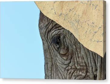 The Eye Of An Elephant Canvas Print