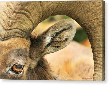 I've Got An Eye On You Canvas Print by Brian Gustafson