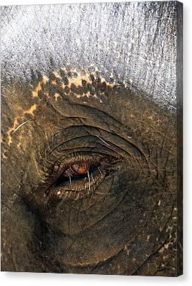 The Eye Of Wisdom Canvas Print by Kelly Jones