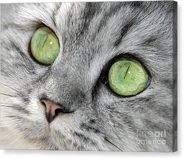 The Eyes Have It Canvas Print by Graham Taylor