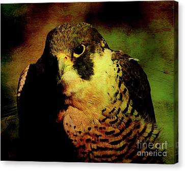 The Falcon Canvas Print by Wingsdomain Art and Photography
