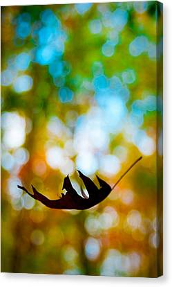 The Fall Canvas Print by Ryan Heffron