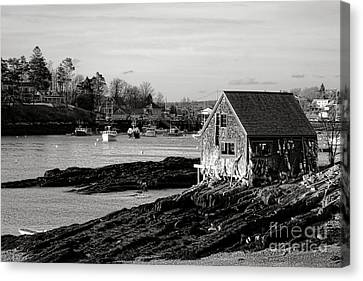 Fishing Shack Canvas Print - The Famous Lobsterman Shack On Mackerel Cove  by Olivier Le Queinec