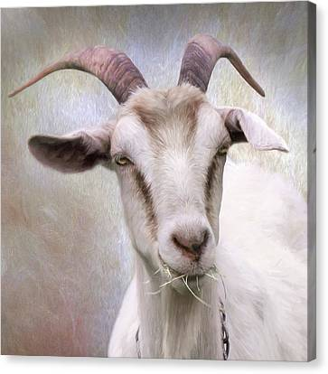 Counry Canvas Print - The Farmer's Billy Goat by Lori Deiter