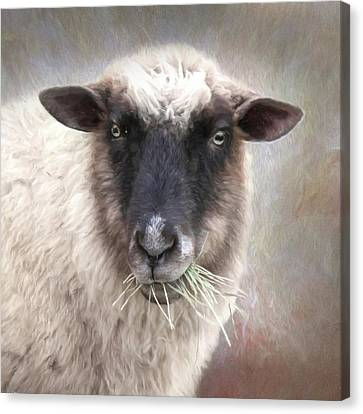 Counry Canvas Print - The Farmer's Sheep by Lori Deiter