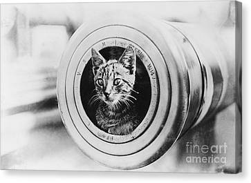 The Feline Mascot On Hmas Encounter During The First World War Canvas Print by MotionAge Designs
