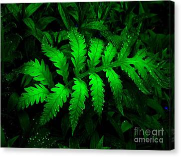 Canvas Print featuring the photograph The Fern by Elfriede Fulda