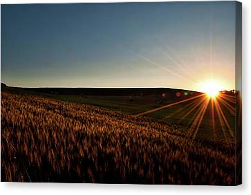 Canvas Print featuring the photograph The Field Of Gold by Mark Dodd