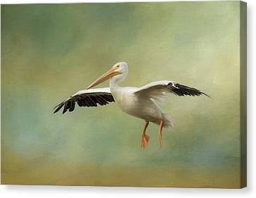 Flying White Pelicans Canvas Print - The Final Approach by Kim Hojnacki