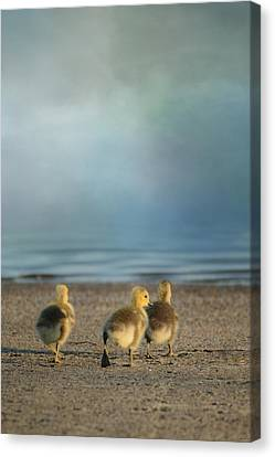 Geese Canvas Print - The First Big Adventure by Jai Johnson