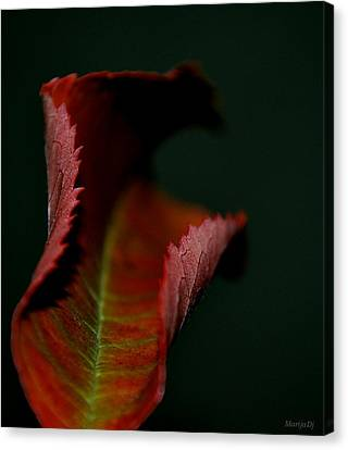 Canvas Print featuring the photograph The First Day Of Fall by Marija Djedovic
