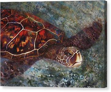 The First Honu Canvas Print by Kerri Ligatich