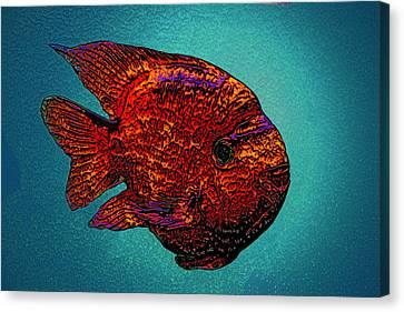 The Fish Parrot Canvas Print