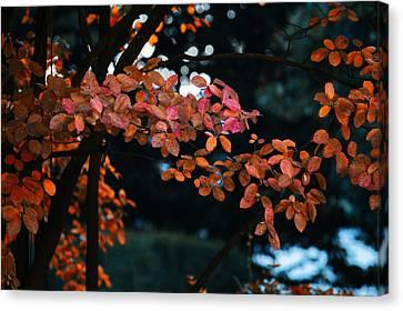 The Flair Of Autumn Canvas Print by Nicole Frischlich