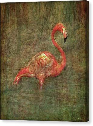 Canvas Print featuring the photograph The Flamingo by Hanny Heim