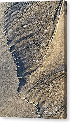 The Flight Of Sand Canvas Print by Tim Gainey