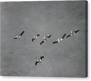 Flying White Pelicans Canvas Print - The Flock by Kim Hojnacki