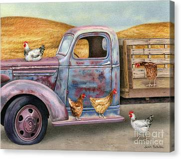 Where The Hens Gather  Canvas Print by Sarah Batalka
