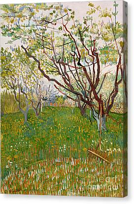The Flowering Orchard, 1888 Canvas Print by Vincent Van Gogh