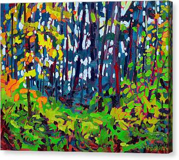 The Forest And The Trees Canvas Print by Phil Chadwick