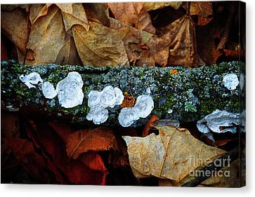 Canvas Print featuring the photograph The Forest Floor - Cascade Wi by Mary Machare