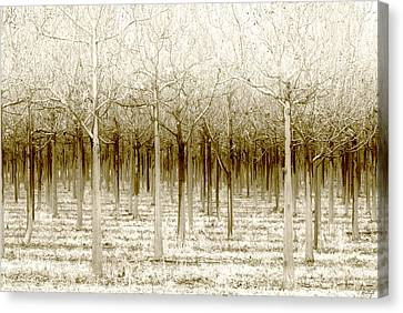 The Forest For The Trees Canvas Print by Holly Kempe