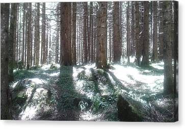 The Forest Lights Canvas Print by Giuseppe Epifani