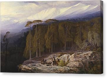 The Forest Of Valdoniello, Corsica Canvas Print