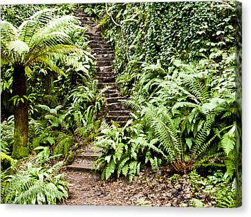The Forest Stairwell Canvas Print by Rae Tucker
