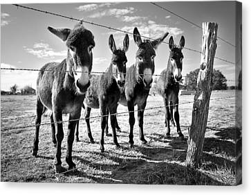Canvas Print featuring the photograph The Four Amigos by Sharon Jones