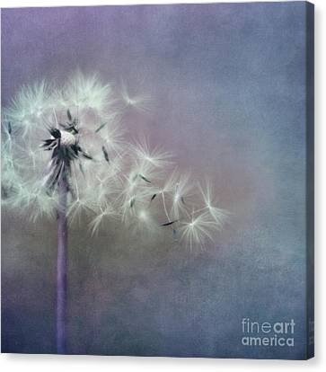 The Four Winds Canvas Print by Priska Wettstein