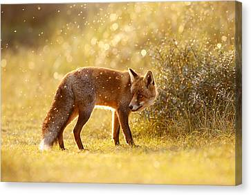 The Fox And The Fairy Dust Canvas Print