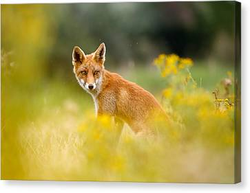 The Fox And The Flowers Canvas Print by Roeselien Raimond