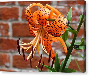 The Garden Tiger Lily Canvas Print by Mike McGlothlen