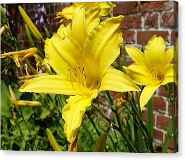 The Garden Yellow Lily Canvas Print by Mike McGlothlen