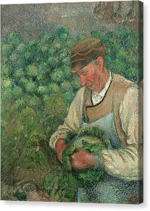 The Gardener - Old Peasant With Cabbage Canvas Print by Camille Pissarro