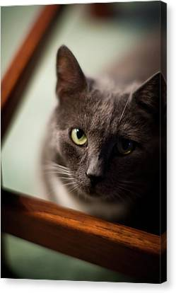 The Gaze Canvas Print by Mike Reid