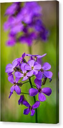 The Gentleness Of Spring 3 Canvas Print by Steve Harrington