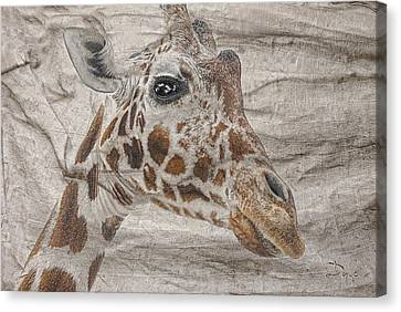 Canvas Print featuring the photograph The Giraffe  by Dyle   Warren