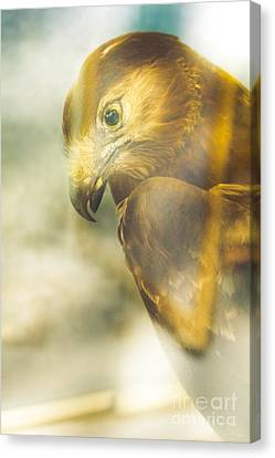 The Glass Case Eagle Canvas Print by Jorgo Photography - Wall Art Gallery