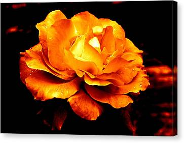 The Glow Of Amber.... Canvas Print