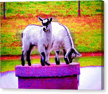 The Goats Canvas Print by Tim Mattox