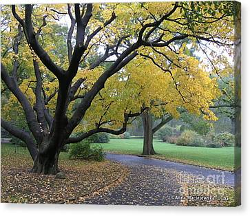 The Golden Fall Canvas Print