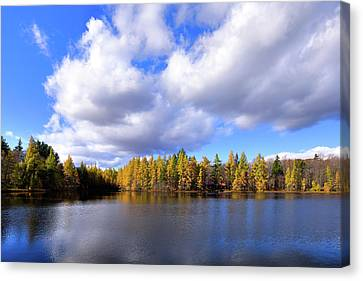Canvas Print featuring the photograph The Golden Forest At Woodcraft by David Patterson