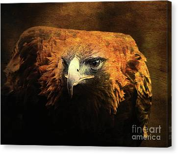 The Golden Hawk Locks On Target . R3593 Canvas Print by Wingsdomain Art and Photography