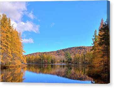 Canvas Print featuring the photograph The Golden Tamaracks Of Woodcraft Camp by David Patterson