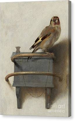 Finch Canvas Print - The Goldfinch, 1654  by Carel Fabritius