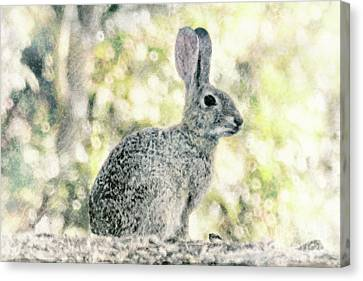 The Good Bunny Canvas Print by Davy Cheng